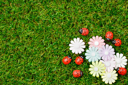 Green grass spring garden with ladybugs and flower