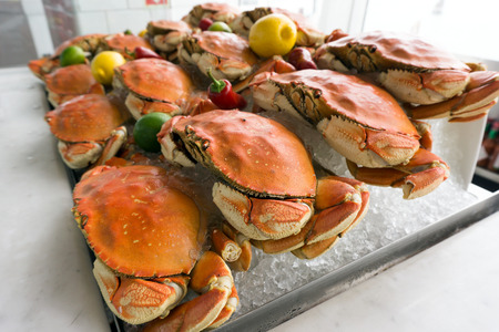 dungeness: Fresh dungeness crab on ice at the seafood restaurant
