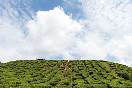 cameron highlands: Landscape with tea plantation in Cameron Highlands, Malaysia Stock Photo