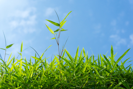 vitality: Close up of green grass and sky forming background Stock Photo