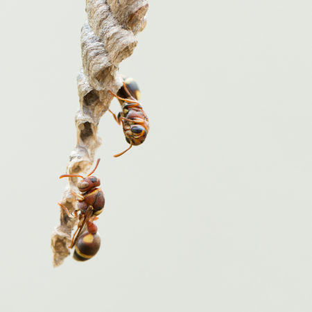 Macro shot of bees isolated on grey color background Stock Photo