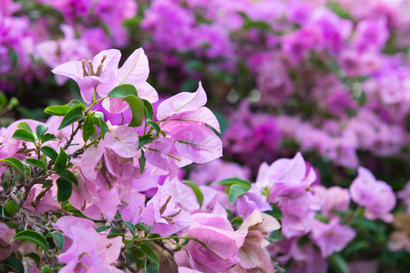 Close up of blossom purple flowers in day time