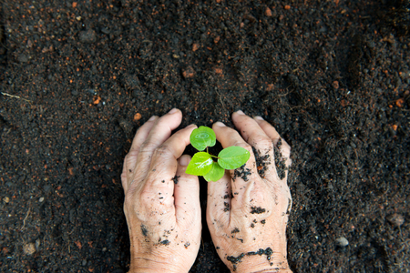environmental conversation: Old woman hand planting a fresh young plant on soil
