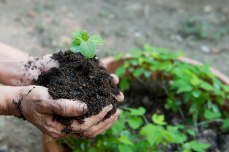environmental conversation: Old woman hand holding a fresh young plant with soil