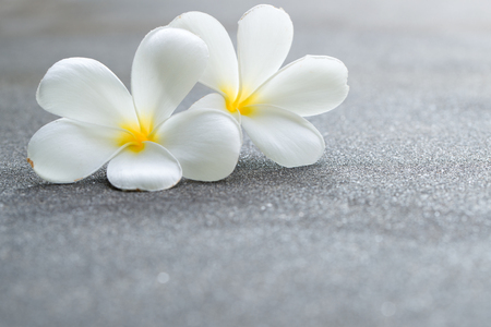 White plumeria or frangipani flowers on the road, with copy space