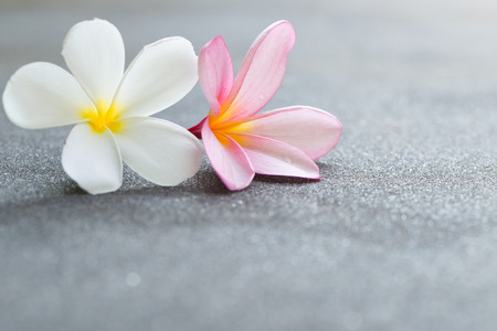 Plumeria or frangipani flowers on the road, with copy space