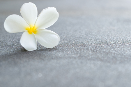 White plumeria or frangipani flower on the road, with copy space Stock Photo