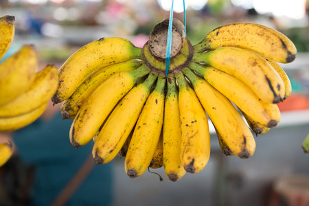 sell: Hanging banana bunch for sale in market place.