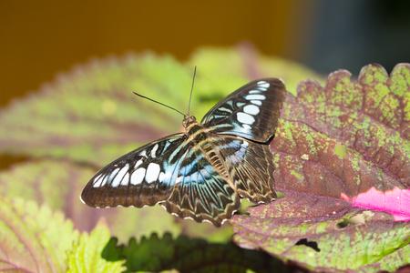 Feche acima da borboleta nas folhas