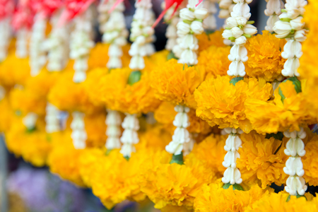 Flower garland contains the yellow Marigold and crown flower for safe and good luck