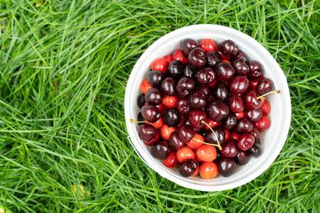 Freshly picked cherries in a basket in the garden 版權商用圖片