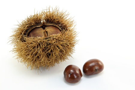 chestnuts have been picked up in the mountains in the fall.