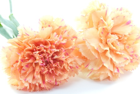 This is a picture of pink carnations I was taken in May