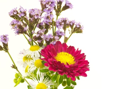 This is a picture of astor and wildflowers, I have taken Stock Photo - 13909853