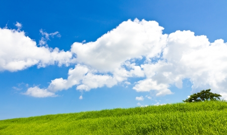 This is a picture of meadows and summer sky I was taken in July. Stock Photo