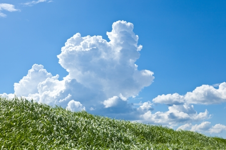 This is a picture of grass and thunderhead I have taken in August  Stock Photo