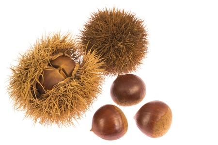 This is a photo of chestnuts that I have picked up in the fall.