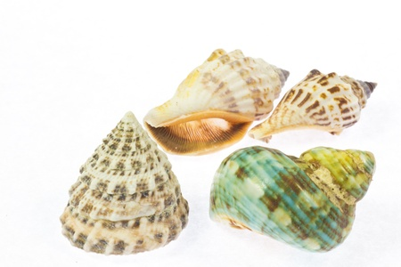 This is a photo of a colorful shells.