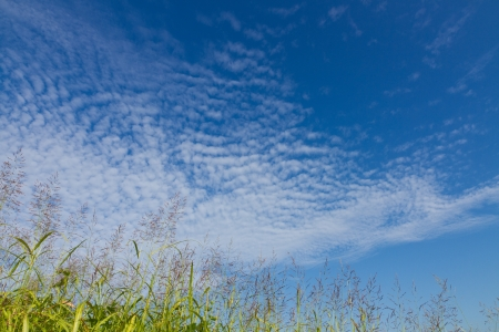 This is a photo of the autumn sky and the grass I took in October.