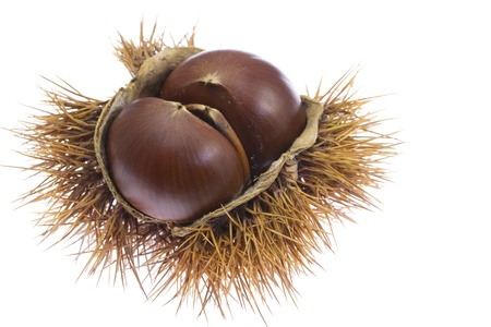 This is a photo of chestnuts that I have picked up in the fall  Stock Photo