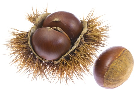 This is a chestnuts that I have picked up in the fall. Stock Photo