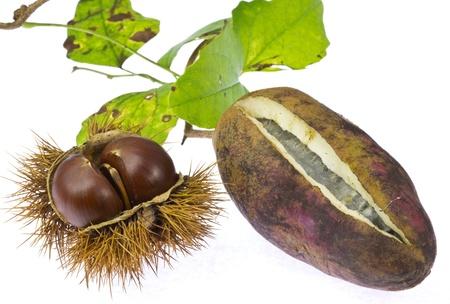 vine pear:  chestnut and chocolate vine