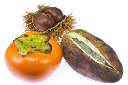 persimmon and chestnut and chocolate vine  Stock Photo