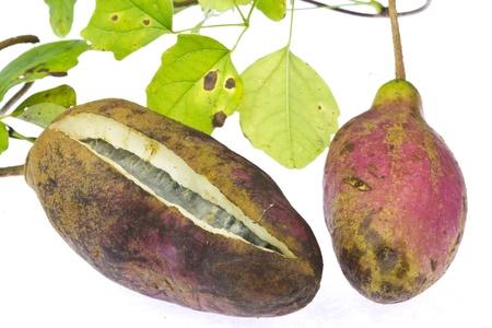 vine pear:  akebi
