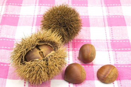 This is a picture of chestnuts that I have picked up in the fall