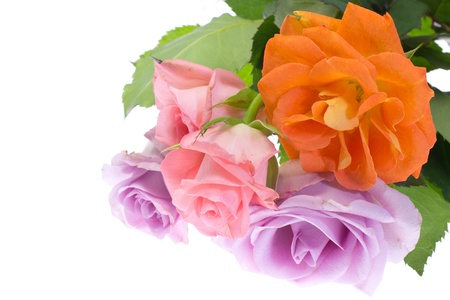 This is a picture of colorful roses. photo