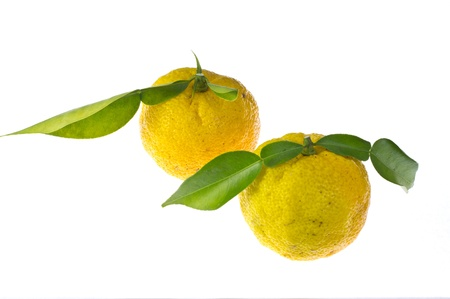 This is a photo of the citron used as seasoning. Stock Photo