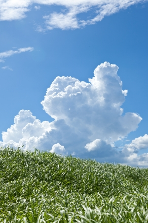 thunderhead: This is a picture of grass and thunderhead I have taken in August. Stock Photo