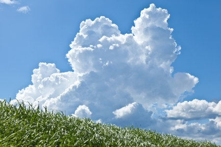 This is a picture of grass and thunderhead I have taken in August. Stock Photo - 16824564