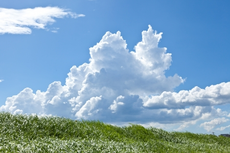 This is a picture of grass and thunderhead I have taken in August. Stock Photo - 16986646