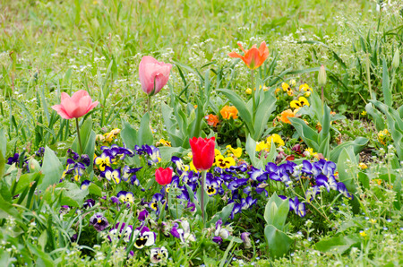 flower bed in the field. photo