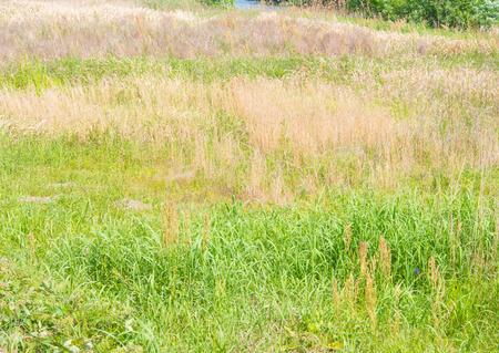 meadow  grass: prado de hierba y heno Foto de archivo