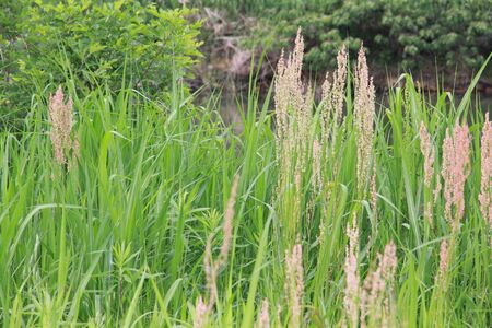 grass in the forest 写真素材