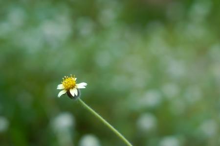 Flower of grass Stock Photo