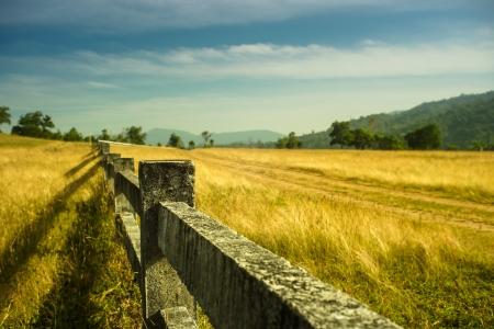 elevation: Mountain meadow