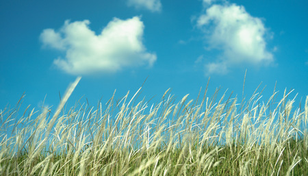 Outdoor have grass with blue sky in the summer