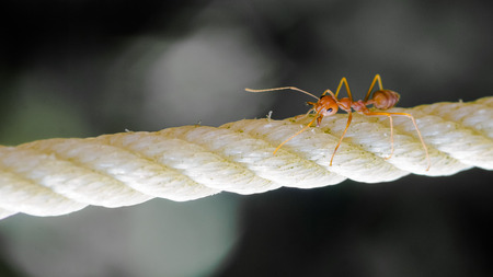 Small ant on a rope