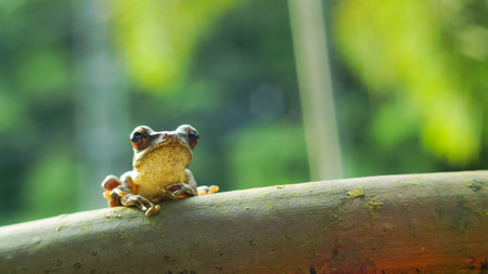 The frog in the my garden Stock Photo