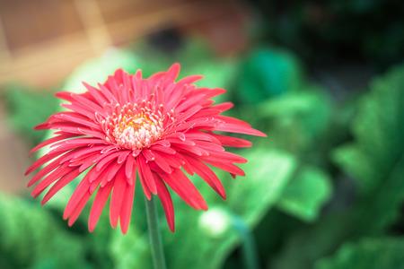 red flower in the garden