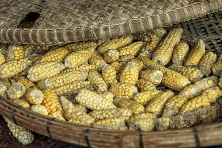 corn dried for Farm animals