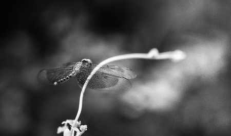 The dragonfly in nature summer