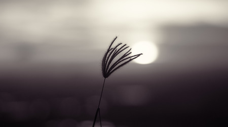 Grass with solar  sunset day Stock Photo