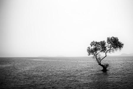 Tree alone in the sea Stock Photo