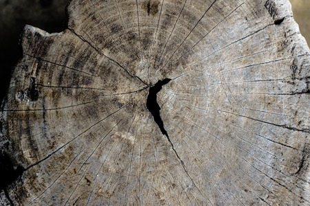 stump have textured cracked old Stock Photo