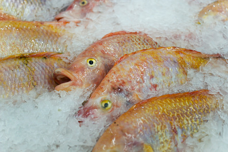 Frozen fish and ice in the market Stock Photo