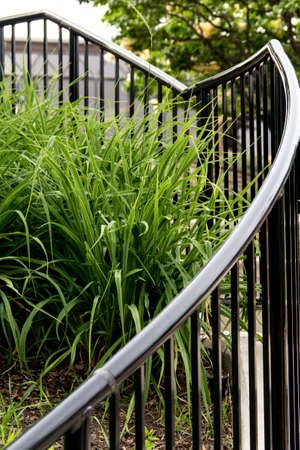 bordered: Staircase with Green foilage bordered by a black wrought iron railing resembling an abstract heart outline